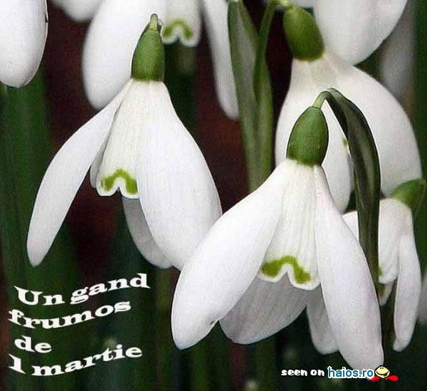 un_gand_frumos_de_1_martie_ghiocei_clopotei_albi.jpg