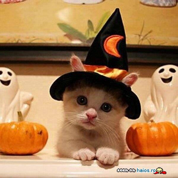 pisic_alb_cu_palarie_de_vrajitor_halloween_fantome_dovleci.jpg