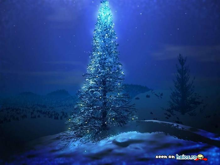 pom_de_craciun_albastru_luminat_de_sus_natura_magie_jesika.jpg